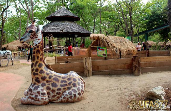 清迈动物园2