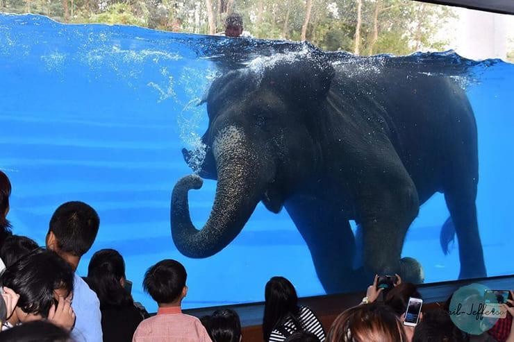 芭提雅绿山动物园2
