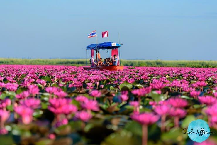 红莲海Red Lotus Sea
