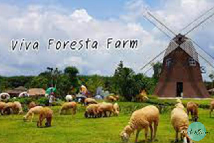 Viva Foresta Farm1
