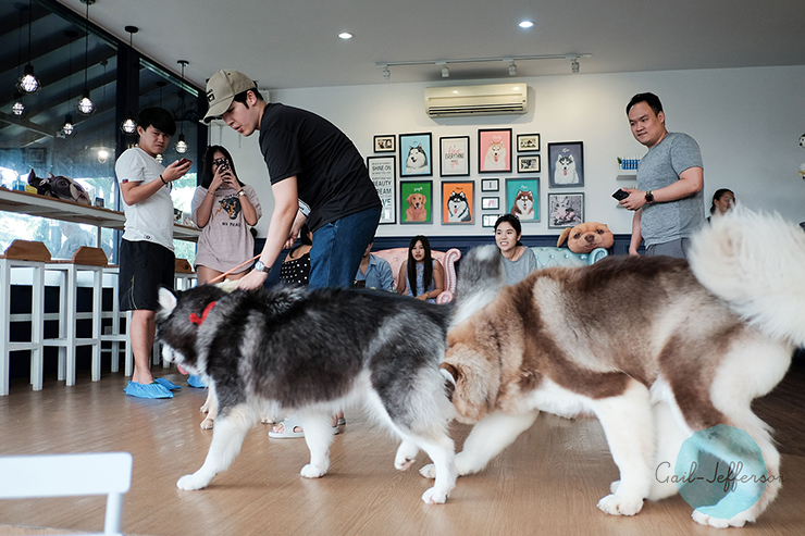 Husky House Cafe 狗咖啡馆