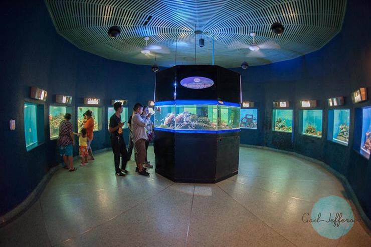 邦盛水族馆 Bangsheng Aquarium