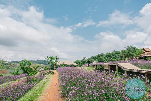 Nong Hoi Royal Project1